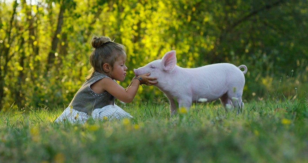 Vegan – Gesundheit und Umwelt zuliebe